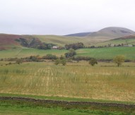 Willow for biomass willow, Scotland