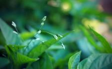 Micro-sensors in plants