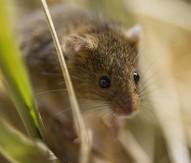 Scientific importance of mouse genome proven