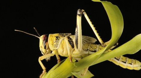 H2020 aims to destabilise pest insects' hormones