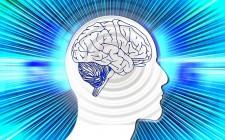 Key funding for Dutch human behaviour simulator study