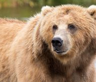 Italy official defends killing rare bear