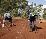 AfriCultuRes project uses EO to support farmers